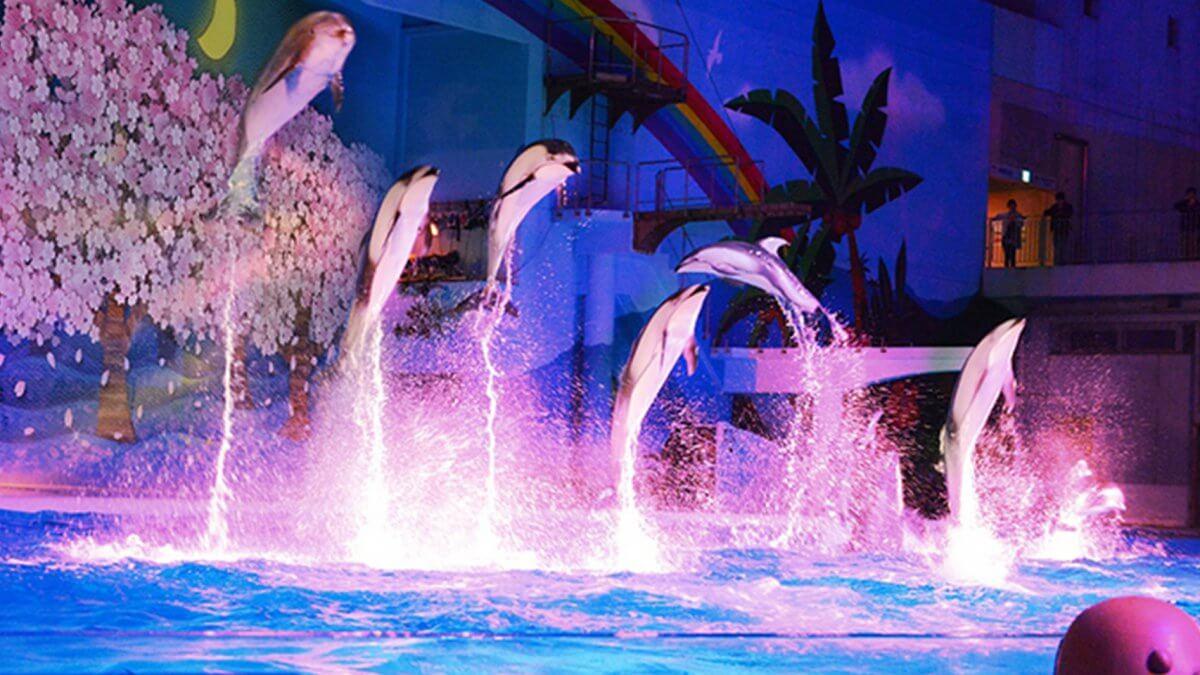 大型LEDビジョンの新設でイルカのショーをフルリニューアル!日本最大級の水族館「八景島シーパラダイス」
