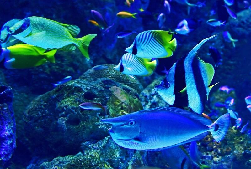 水族館でも導入可能!LEDビジョンの特徴と施設への導入事例を紹介