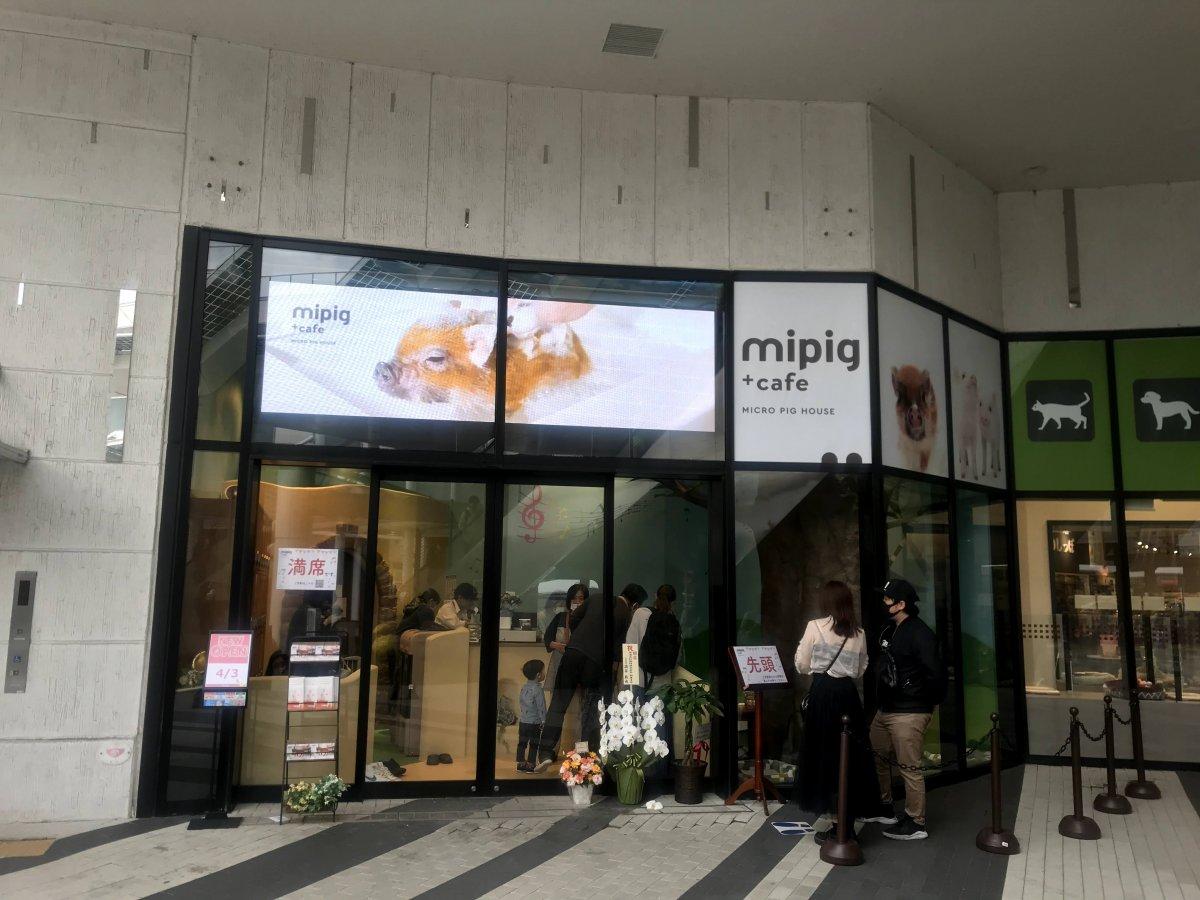 日本初のマイクロブタカフェ『mipig cafe』の4号店・イオンレイクタウン店にLEDビジョンを導入しました